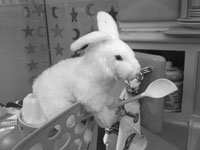What, you've never seen a bunny brandishing a wooden spoon before?